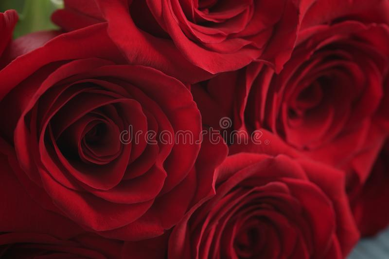 Red roses on light blue wood background royalty free stock photography