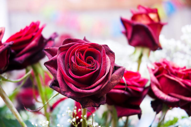 Red roses and other flowers. In arrangement royalty free stock images