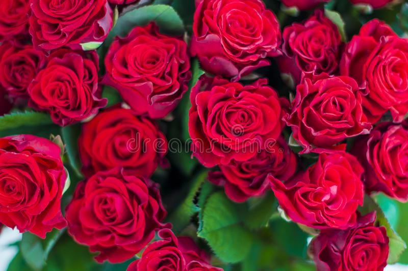 Red roses pattern royalty free stock photos