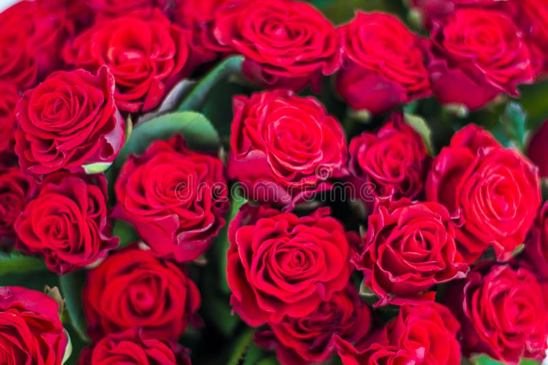 Red roses pattern. Close-up royalty free stock photography
