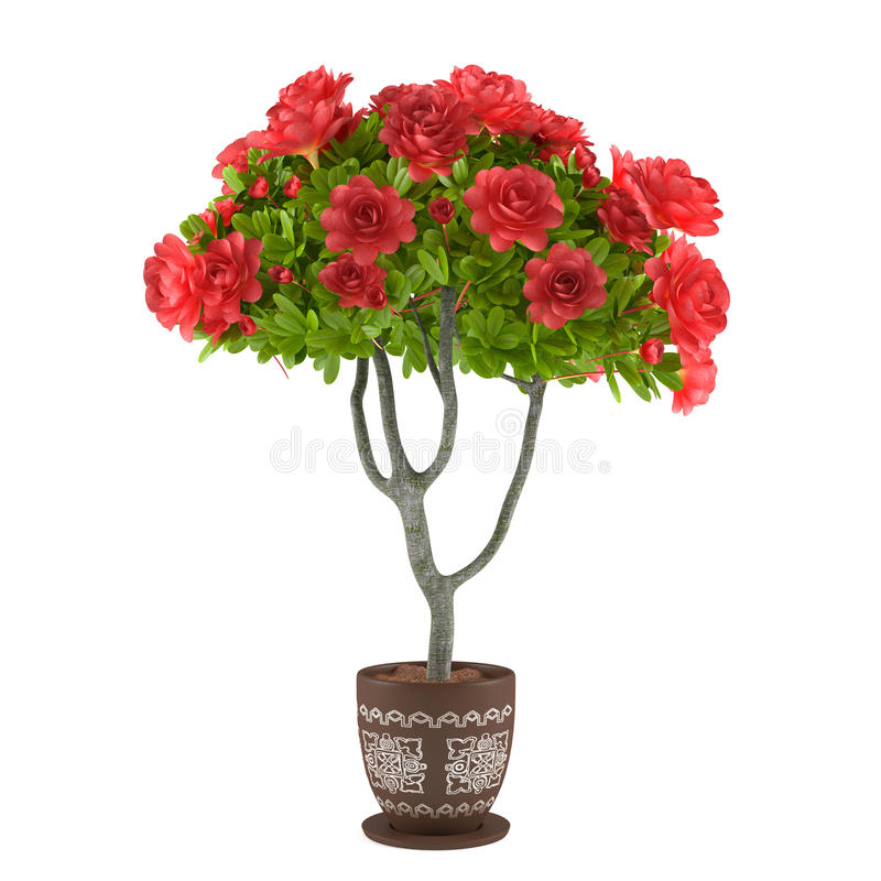 Red roses in the pot. Flowers vector illustration