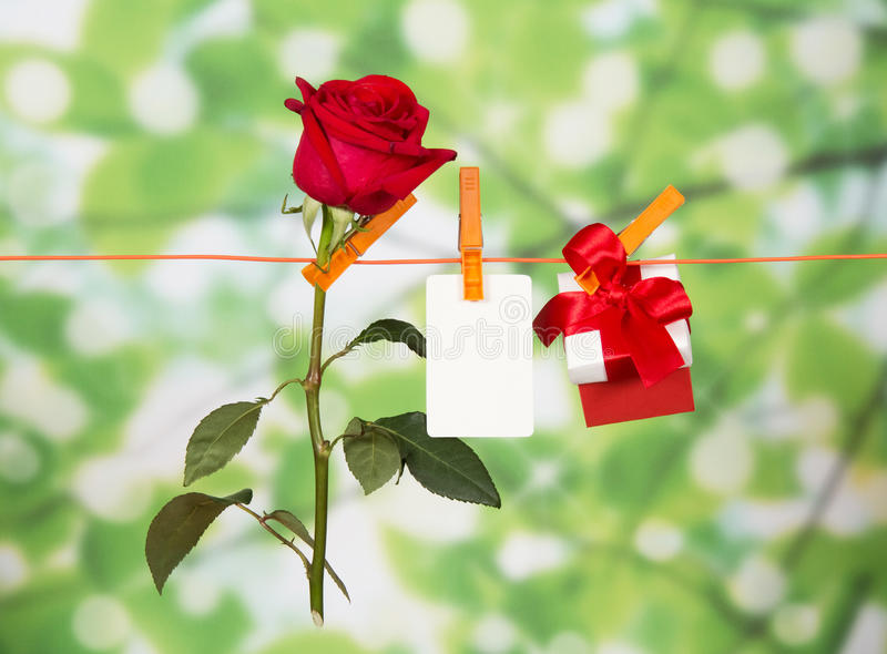 Red roses, present and name card on clothesline. Outdoors royalty free stock images