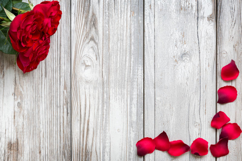Red roses and rose petals on wooden background. Red roses and rose petals on white, wooden vintage background stock image