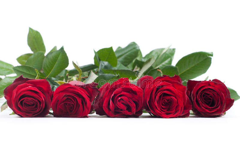 Download Red roses stock image. Image of passion, open, isolated - 35276625