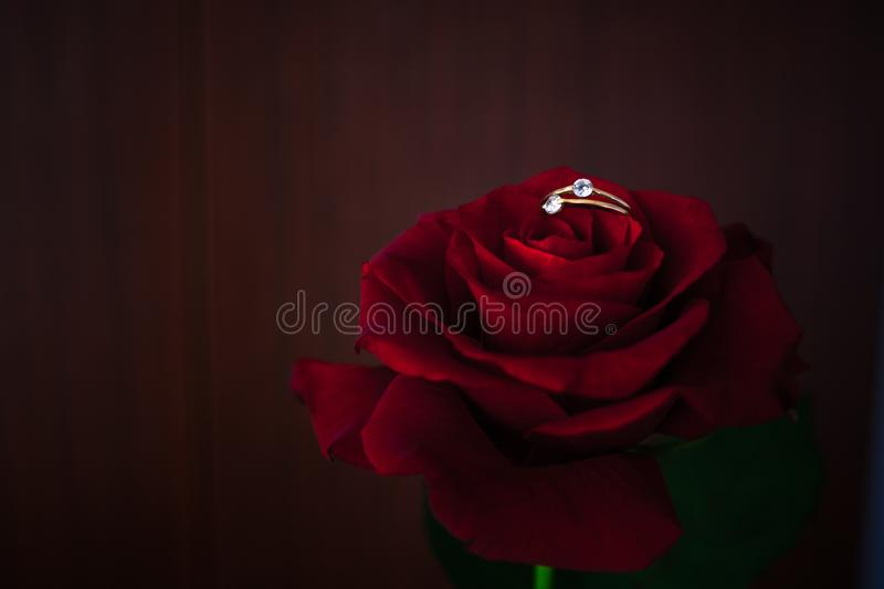 Red roses on the sun flare background stock image