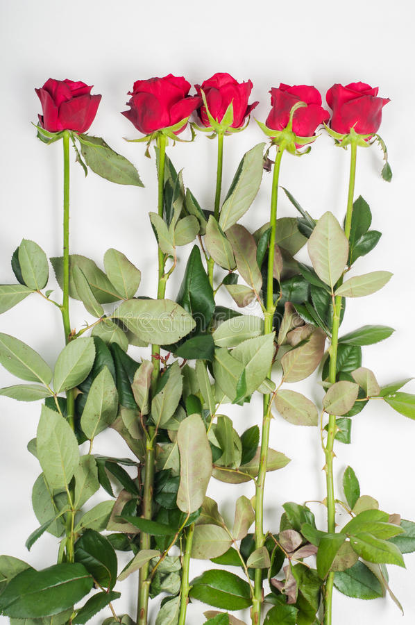 Download Red roses stock photo. Image of beautiful, passion, open - 35290588