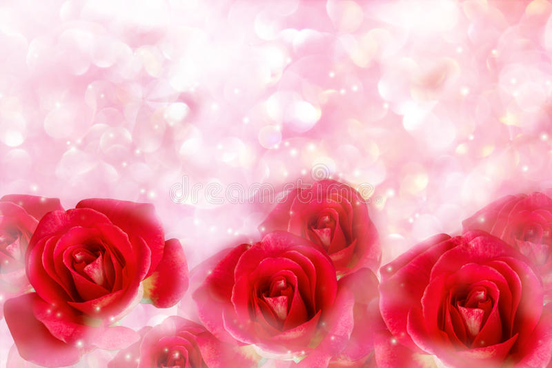 Red roses in wonderful romantic soft pastel pink pearl bokeh. Red roses in wonderful romantic soft pastel pink pearl with bokeh for valentine background royalty free stock photo