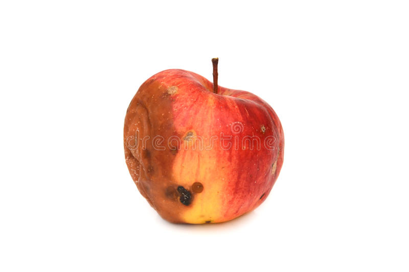 Red rotten apple. royalty free stock image