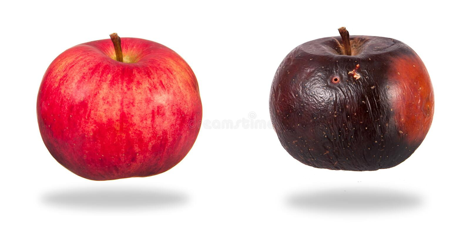 Red and rotten apples. Two apples, red and rotten over white background royalty free stock photo