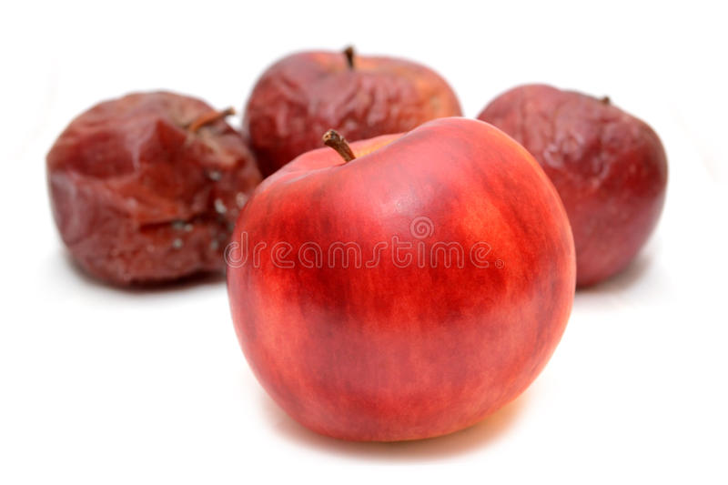 Red rotten apples and healthy apple. Natural color. Red rotten apples and healthy apple. Natural color stock photos