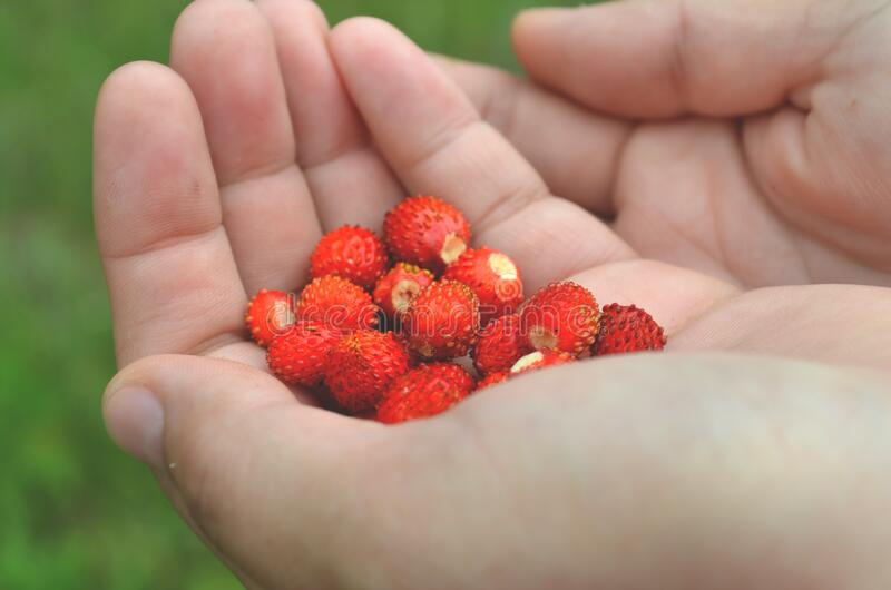 Red Round Fruit On Human's Palm Free Public Domain Cc0 Image