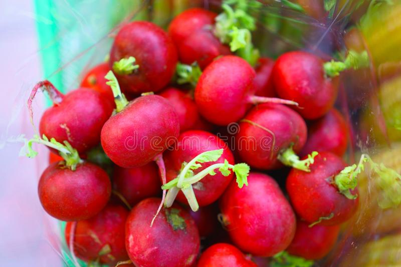 Red round Radish with fresh green leaves in plastic bag royalty free stock images