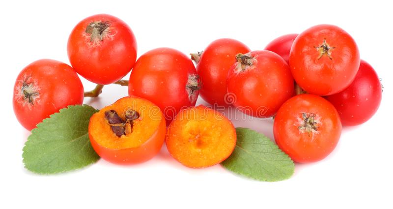Red rowan berries with green leaf isolated on white background. macro stock photo