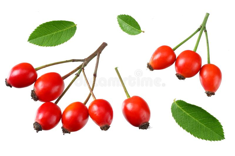 Red rowan berries with green leaf isolated on white background. top view stock photos