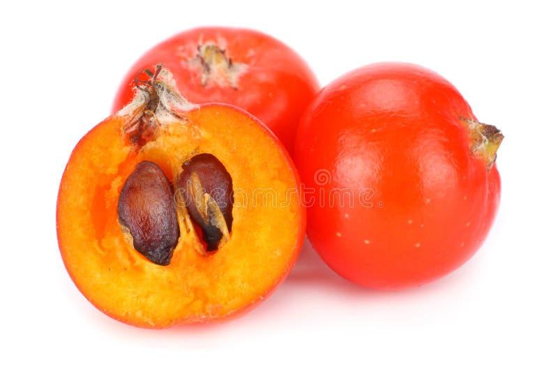 Red rowan berries isolated on white background. macro stock image