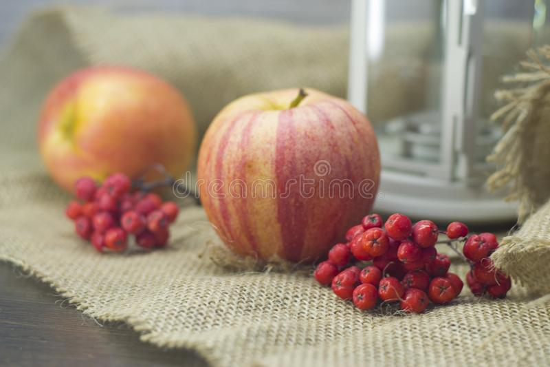 Red Rowan berries and red yellow apples and lantern. Red Rowan berries and red yellow apples and a white lantern stock photos