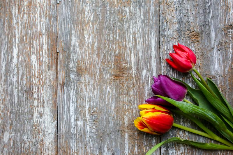 Red, scarlet, purple tulips on wooden background. Perfect invitation for mother`s day or international women`s day. Minimalist royalty free stock photo