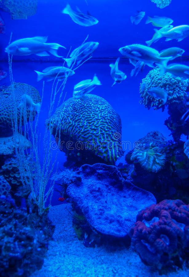 Red sea colorful corals and small fishes. In an aquarium stock photos