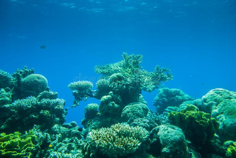 Red sea colorful corals and small fishes. In an aquarium royalty free stock image