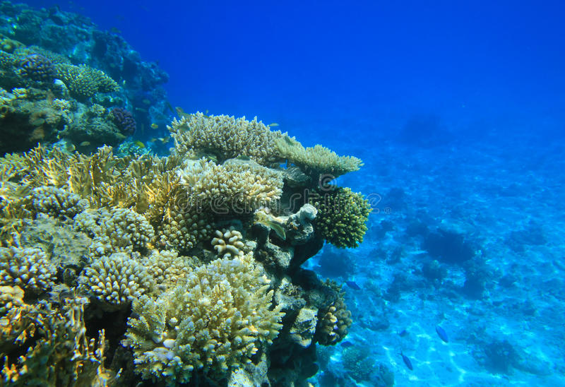 Red sea coral reef royalty free stock image