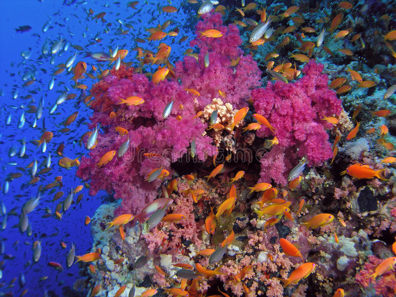Red Sea Coral Reef. Shallow water