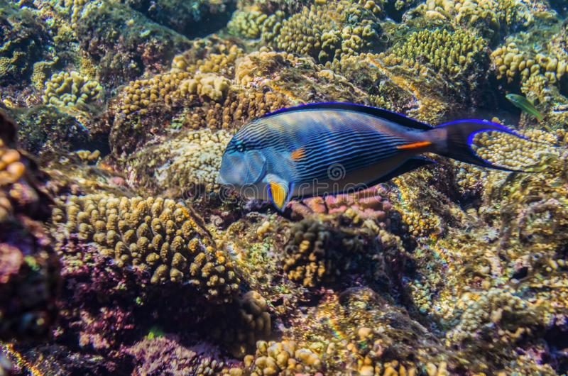 Red sea coral reef with beautiful colorful fish stock images