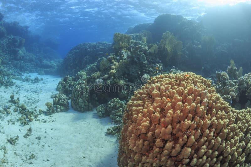 Red Sea, Egypt stock photos