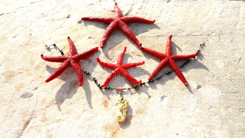 Red sea stars on the sand stock photos