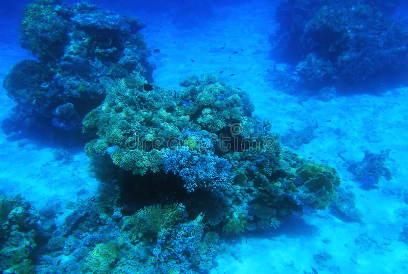 Red Sea underwater royalty free stock image