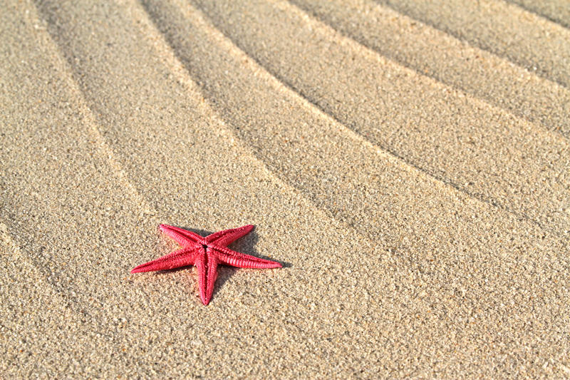 Red Seastar on beach sand royalty free stock images