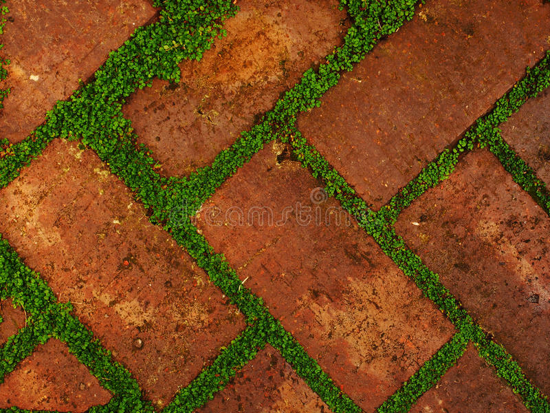 Red shaded bricks with gaps filled by leafy green growth. Red shaded bricks in a diagonal pattern with gaps filled by leafy green growth stock image