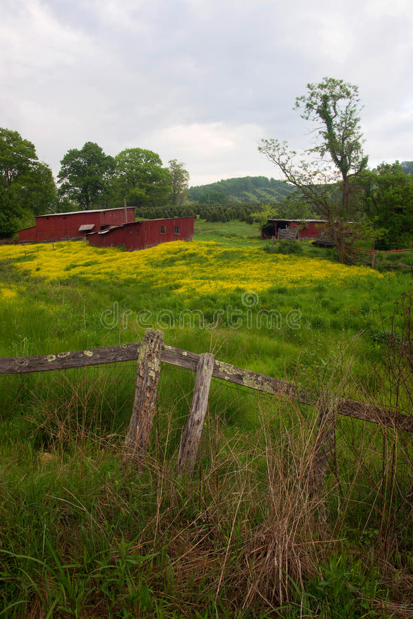 Download Red sheds in flower field stock photo. Image of shed - 54656848