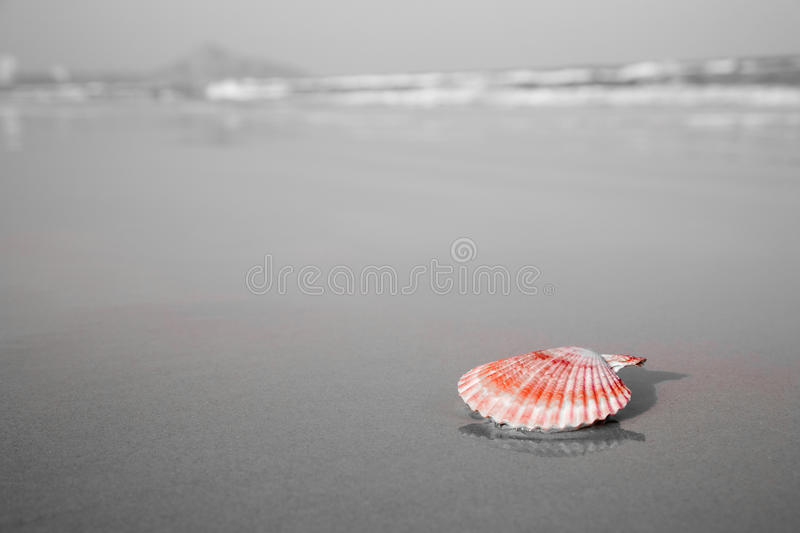 Download Red Shell Laying On The Beach Stock Photos - Image: 13050903