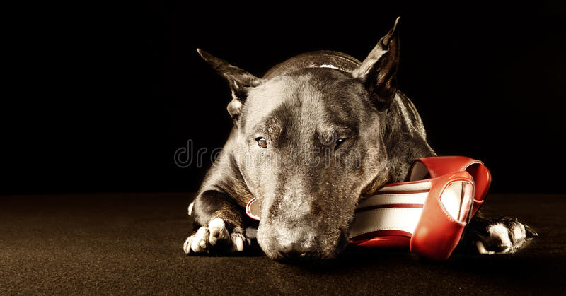 Download Red shoe and brutus stock image. Image of discount, ankle - 28475415