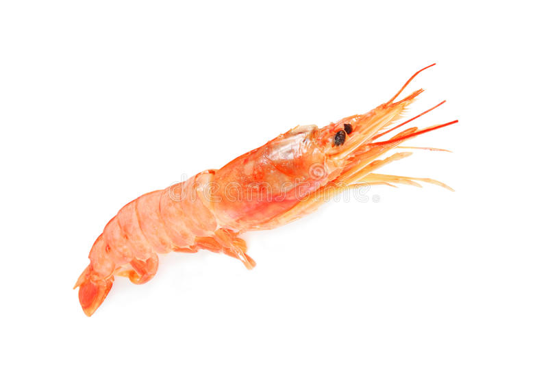 Download Red shrimp stock photo. Image of macro, restaurant, boiled - 28434214