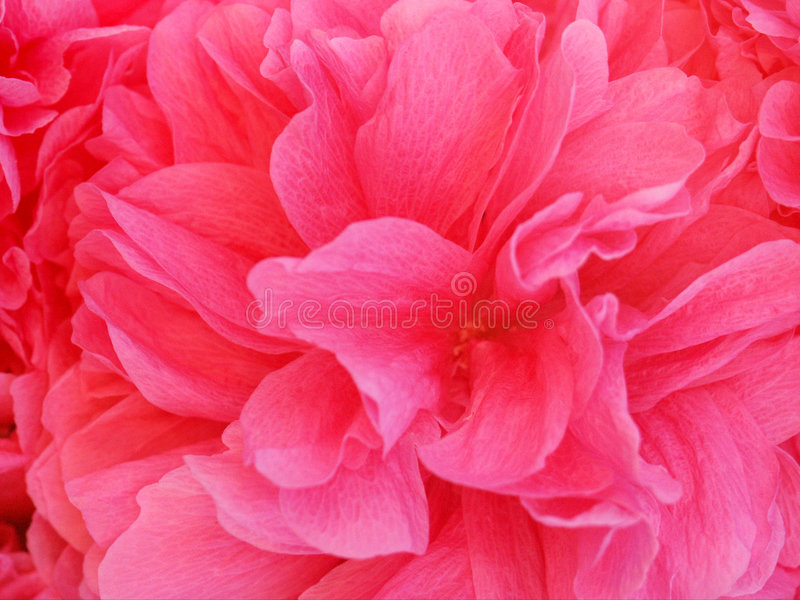 Red Silk royalty free stock photos