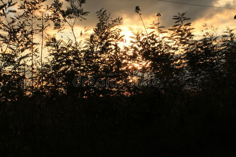 Red Sky through leaves royalty free stock images