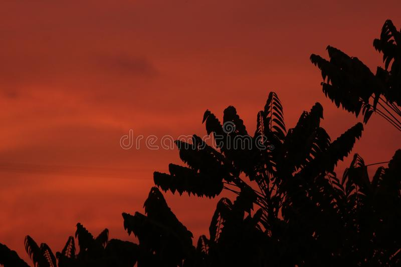 Red sky and silhouette tree at night.  stock images