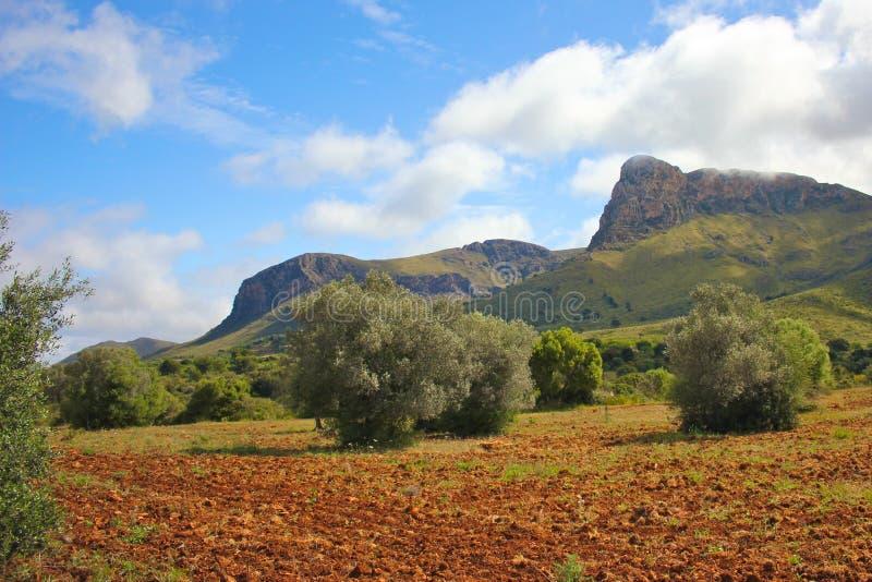 Red smutsar på Majorca arkivbild
