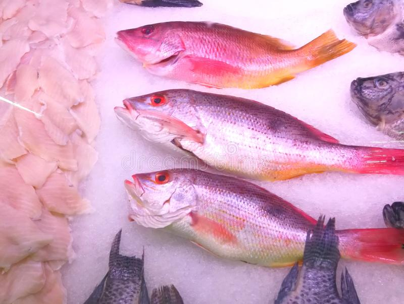 Two species of Red snapper, the black spot and the yellow tail, in the store royalty free stock photos