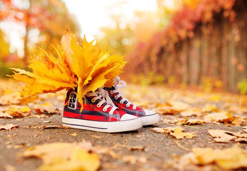Red sneakers with yellow maple leaves inserted in them close-up on the background of the autumn Park. Autumn concept, space for text, copy space stock photos