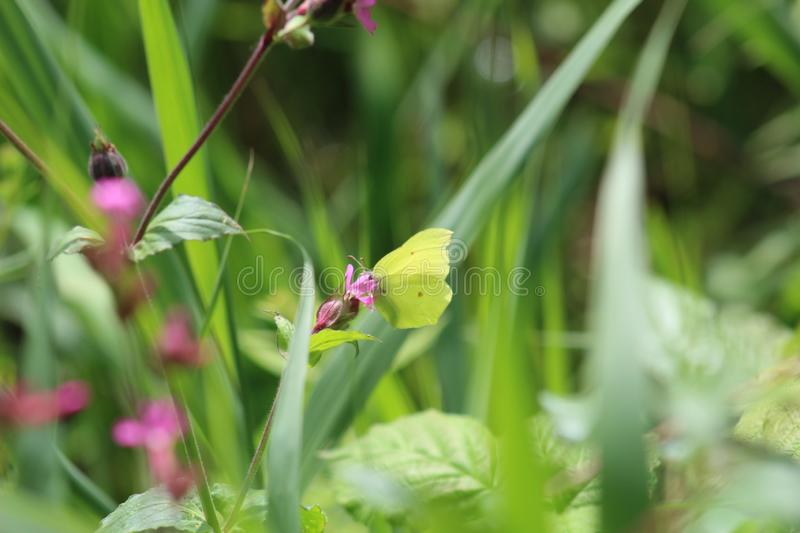Red spot green butterfly stock photo