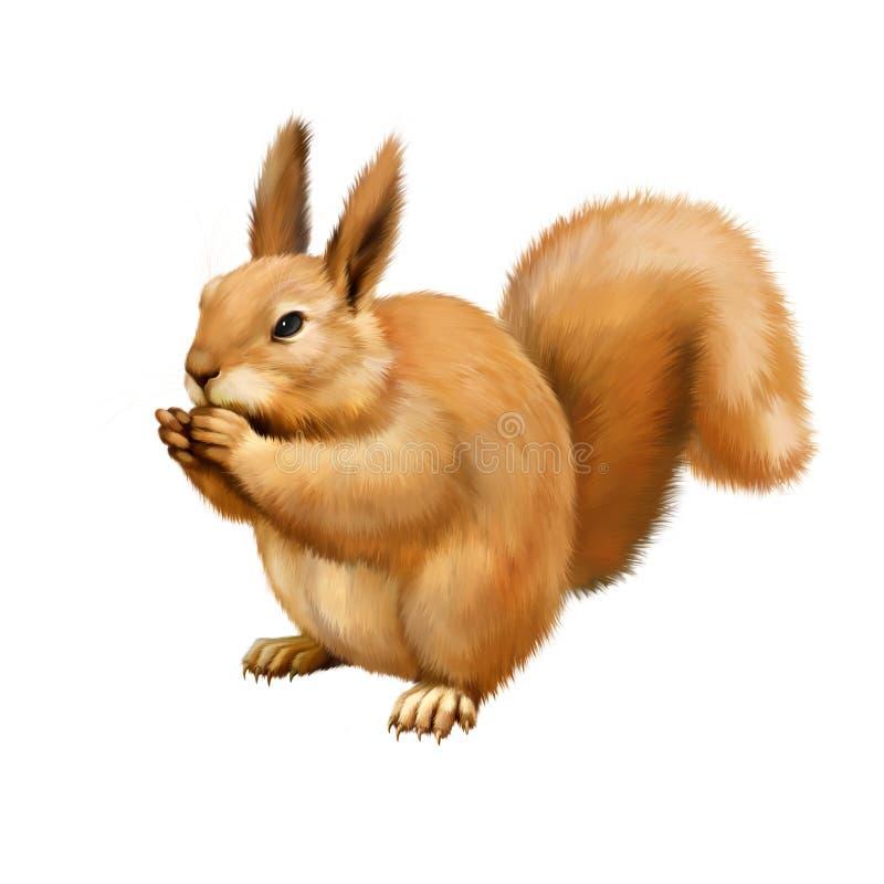 Red Squirrel, Sciurus Vulgaris, sitting eating vector illustration