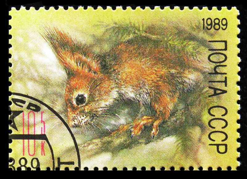 Red Squirrel (Sciurus vulgaris), ZOO Relief Fund serie, circa 1989 fotografie stock