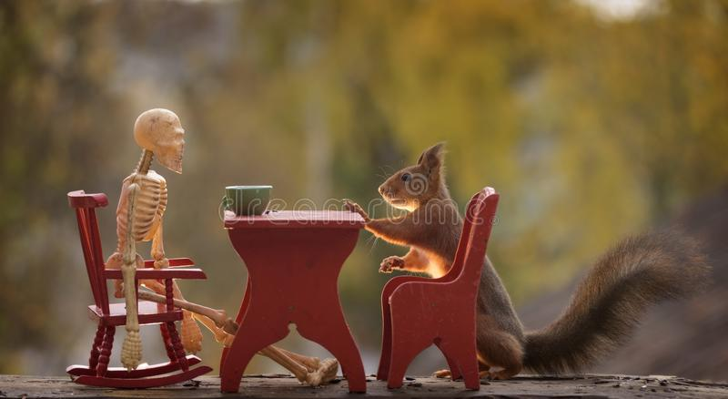 Download Squirrel With Table And A Skeleton Stock Image - Image of color, rodent: 101274649