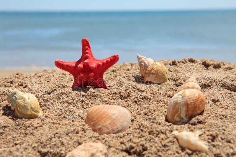 Red starfish on the beach stock images