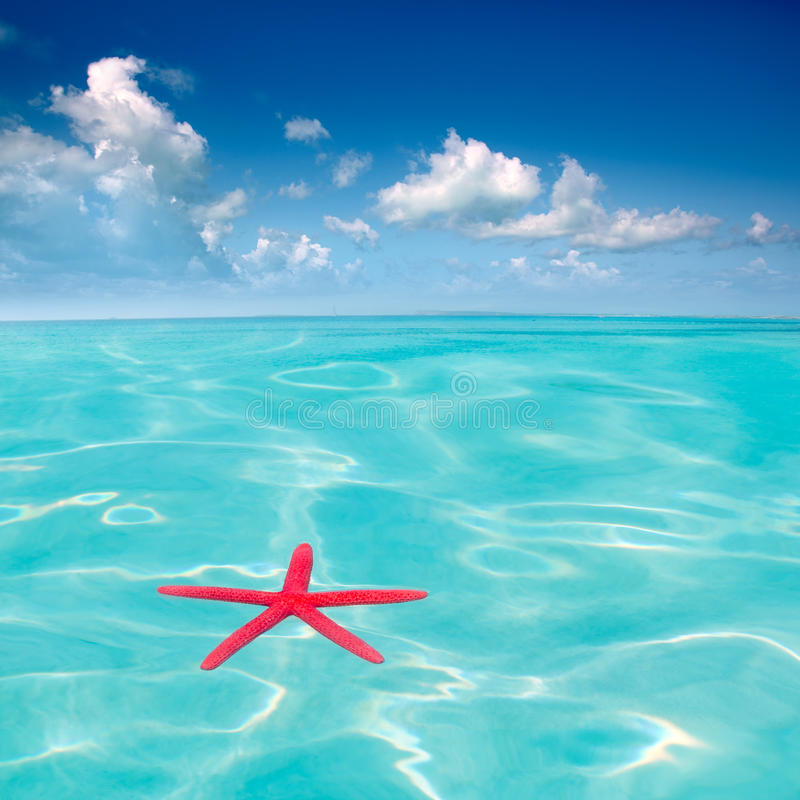 Download Red Starfish Floating On Perfect Tropical Sea Stock Image - Image: 21734871