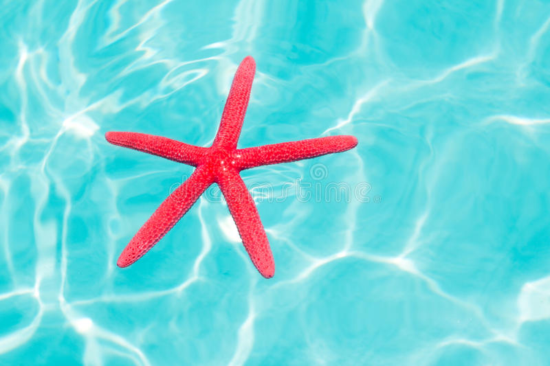 Download Red Starfish Floating On Perfect Tropical Sea Stock Photo - Image: 21734910