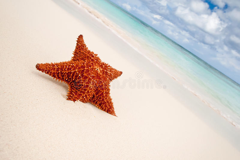 Red starfish on a sand beach royalty free stock photo