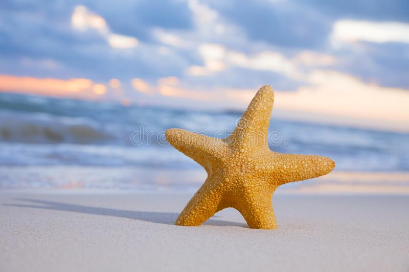 Red starfish on  sand beach royalty free stock image